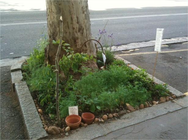 Fragments de nature en milieu urbain  Demain la Ville - Google Chrome