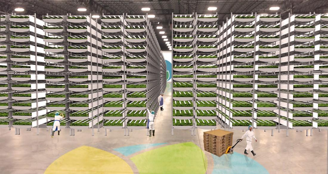 La plus grande ferme verticale du monde ouvre cette année
