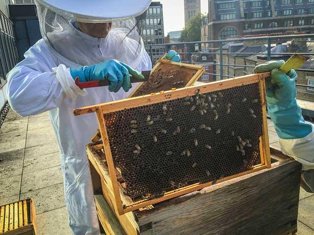 apiculteur-ville-biodiversite